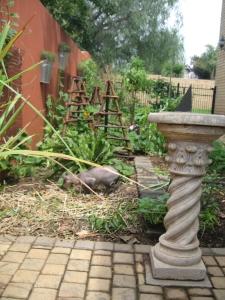food garden irene 2