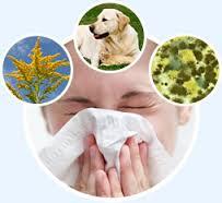 allergies1